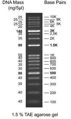 1kb Wide-Range DNA Ladder (L10k) run on a 1.5% TAE agarose gel.