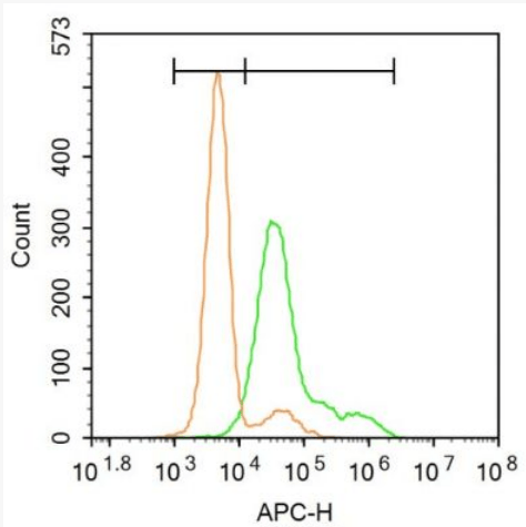 Flow cytometric analysis of U-2OS cells using 5HT2A Receptor antibody