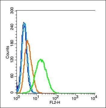 Flow cytometric analysis of RSC 96 cell using Annexin V antibody.