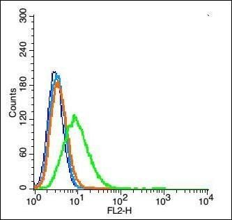 Flow cytometric analysis of A549 Cell using Aquaporin 5 antibody.