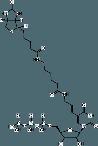 Biotin-11-UTP (Biotin)