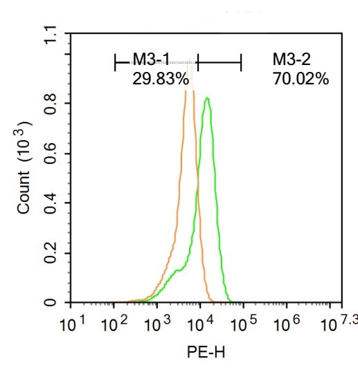 Flow cytometric analysis of U-937 cells lysate using BRN3A antibody
