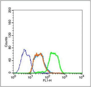 Flow cytometric analysis of Jurkat cells using HSP70 antibody
