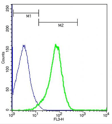 Flow cytometric analysis of (mo)Splenocytes cells using Angiotensin II receptor antibody