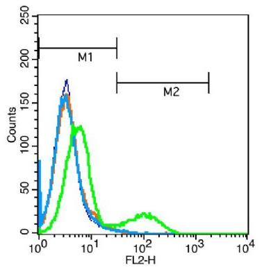 Flow cytometric analysis of Jurkat cells using PAX8 antibody
