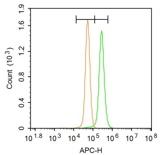 Flow cytometric analysis of A431 cells lysates using PERK (phospho-Thr980) antibody.