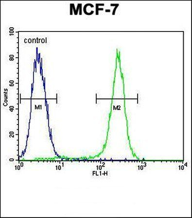 Flow cytometric analysis of C1QL4 antibody in MCF-7 cell line lysates