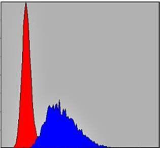 Flow cytometric analysis of NIH/3T3 cells using CASP8 antibody