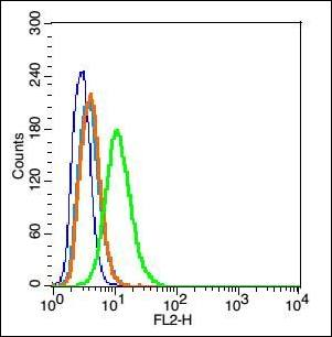 Flow cytometric analysis of Rsc96 cell using Caveolin 1 antibody.
