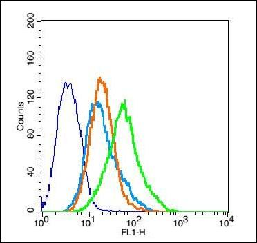 Flow cytometric analysis of 293FT Cell using Claudin 16 antibody.