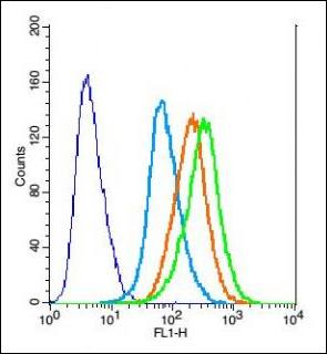 Flow cytometric analysis of Rsc96 cell using CX3CL1 antibody.