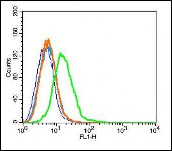 Flow cytometric analysis of Rsc96 cell using Dopamine Transporter antibody.