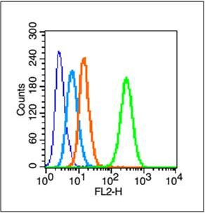 Flow cytometric analysis o HepG2 cells using DNMT3B antibody.