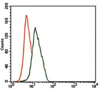 Flow cytometric analysis of HeLa cells using ENO2 antibody