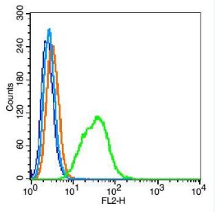 Flow cytometric analysis of HepG2 cells using CD63 antibody.