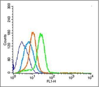 Flow cytometric analysis of U251 cell using ERK1 (phospho-Thr183-185) antibody.