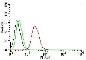 Flow cytometric analysis of MCF-7 cells using Estrogen Receptor beta antibody