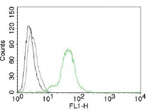 Flow cytometric analysis of BT474 Cells using Estrogen Receptor beta antibody