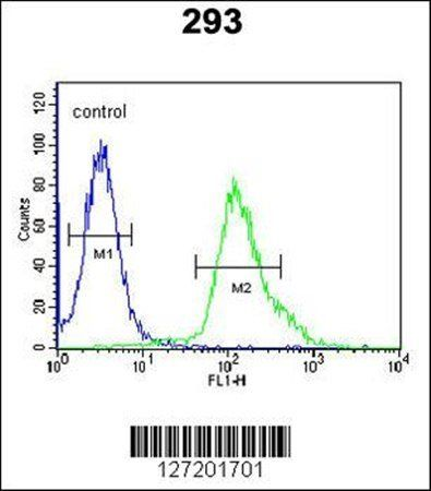 Flow cytometric analysis of FGFBP3 antibody in 293 cell line lysates