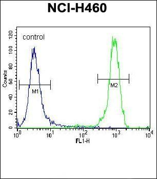 Flow cytometric analysis of NCI-H460 cells using FGFR2 antibody