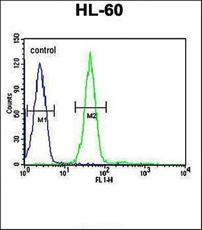Flow cytometric analysis of GRPR antibody in HL-60 cell line lysates