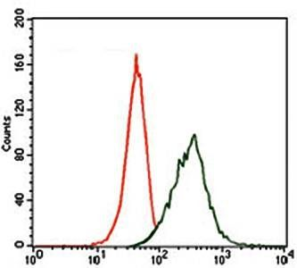 Flow cytometric analysis of HeLa cells using MAP2 antibody