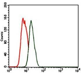 Flow cytometric analysis of MCF-7 cells using NKX2.2 antibody