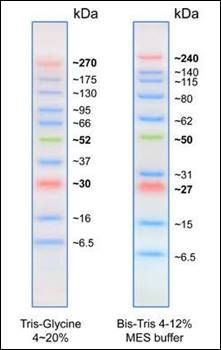 SDS-PAGE analysis of Opti-Protein Ultra Marker
