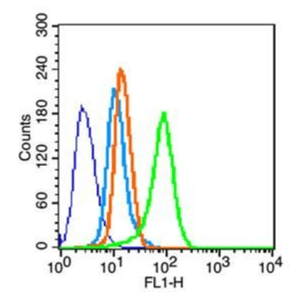 Flow cytometric analysis of HeLa cells using MDR1 antibody