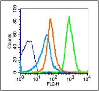 Flow cytometric analysis of Mouse thymus cells using NKG2D antibody