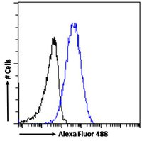 Flow cytometric analysis of paraformaldehyde fixed A431 cells using KPNB1 antibody.