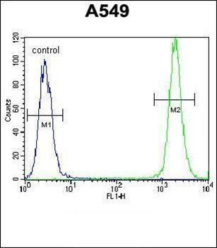 Flow cytometric analysis of A549 cells (right histogram) compared to a negative control cell (left histogram) using TRIM9 antibody (C-term).