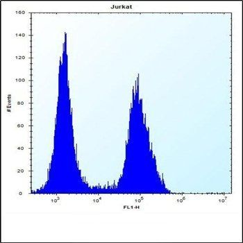 Flow cytometric analysis of Jurkat cells (right histogram) compared to a negative control cell (left histogram) using PRSS7 antibody (C-term E979)
