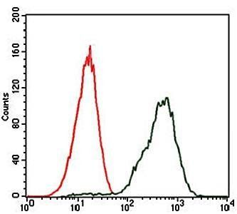 Flow cytometric analysis of Jurkat cells using PDX1 antibody