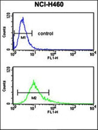 Flow cytometry analysis of S100A10 antibody in NCI-H460 cell line lysates