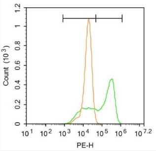 Flow cytometric analysis of A549 cells using FXR antibody