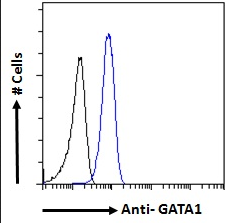 Flow cytometric analysis of paraformaldehyde fixed K562 cells using GATA1 antibody.