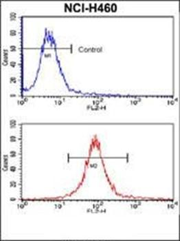 Flow cytometric analysis of NCI-H460 cells using SOX2 antibody (primary antibody dilution at: 1:10-50)