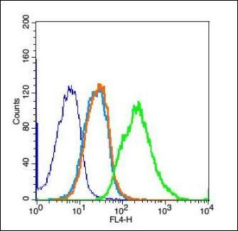 Flow cytometric analysis of Rsc96 cell using Thymosin alpha 1 antibody.