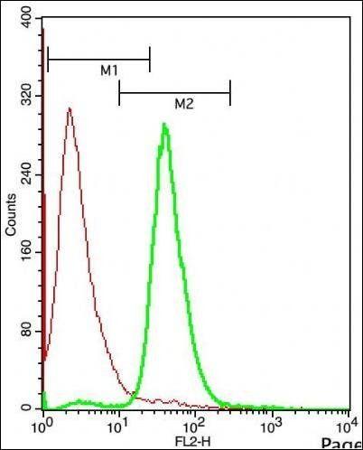 Vitamin D3 Receptor antibody | anti Vitamin D3 Receptor