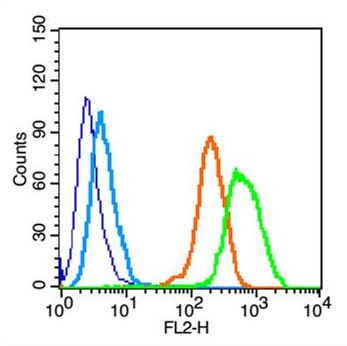 Flow cytometric analysis of HeLa cell using Activated Notch1 antibody.