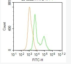 Flow cytometric analysis of Molt4 cells using Phospho-PI3 kinase p85 alpha + gamma (Tyr467 + Tyr199) antibody.