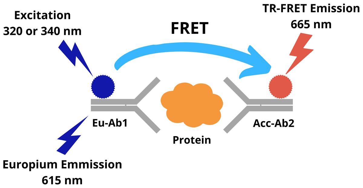 TR-FRET Assay Principle