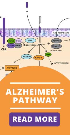 alzheimer's pathway