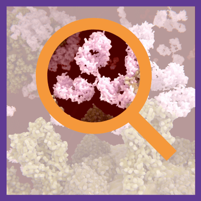 Secondary Antibody Search Tool