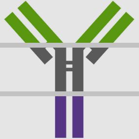 Choose the best Secondary Antibody