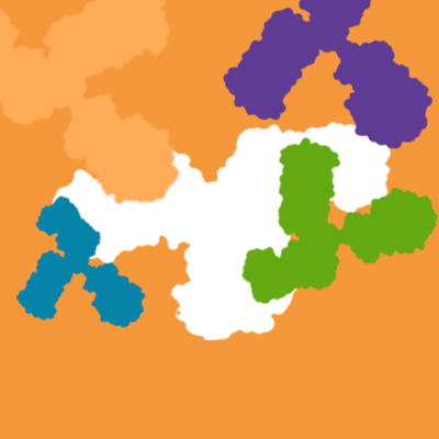 Modified Antibodies