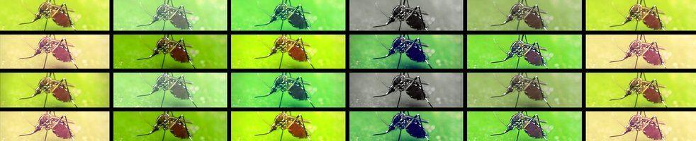 mosquito-borne disease research